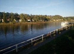 Ruderer auf der Elbe in Pirna